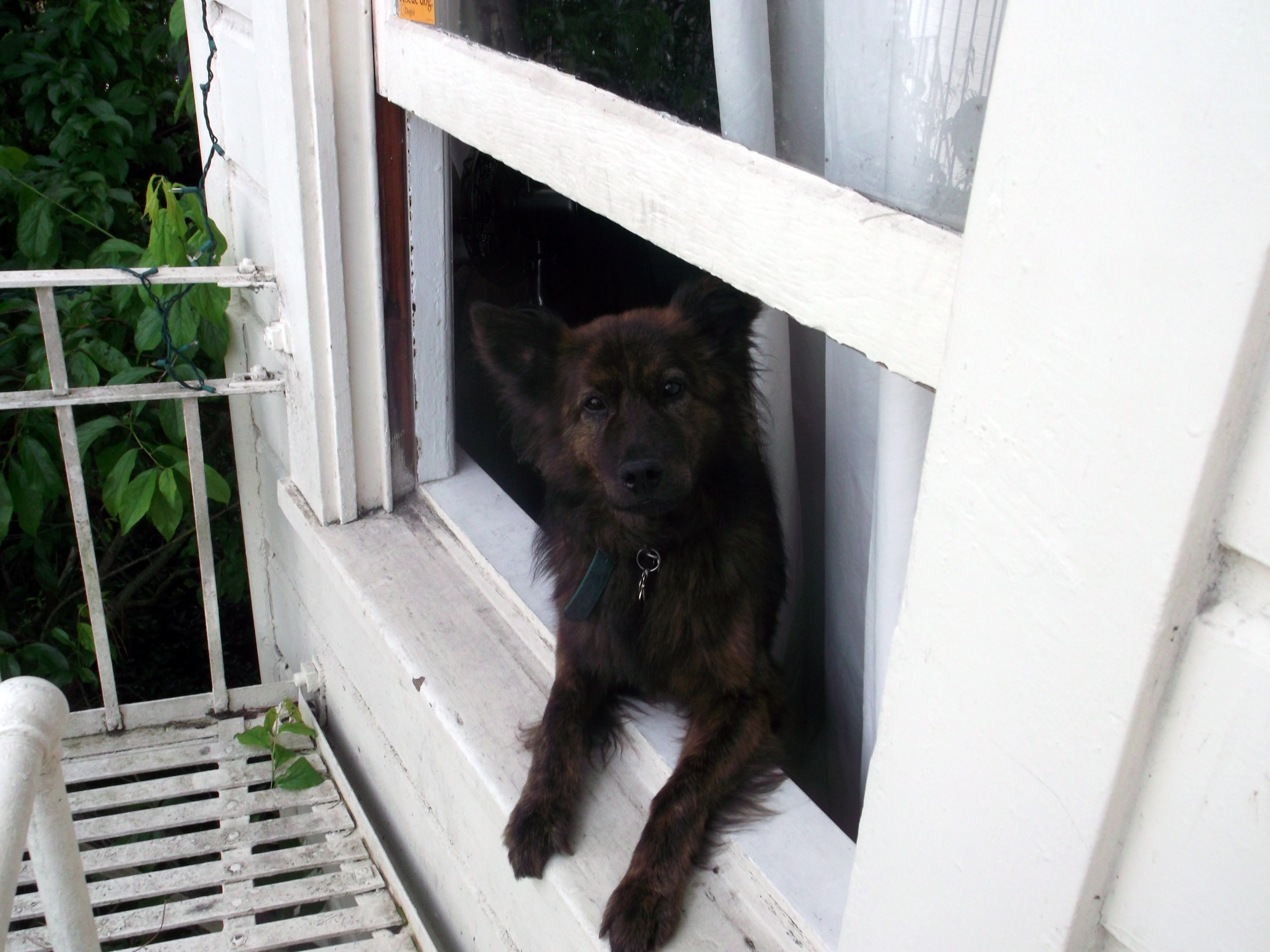 How much is that doggie in the window?  (photo by D. Speredelozzi)