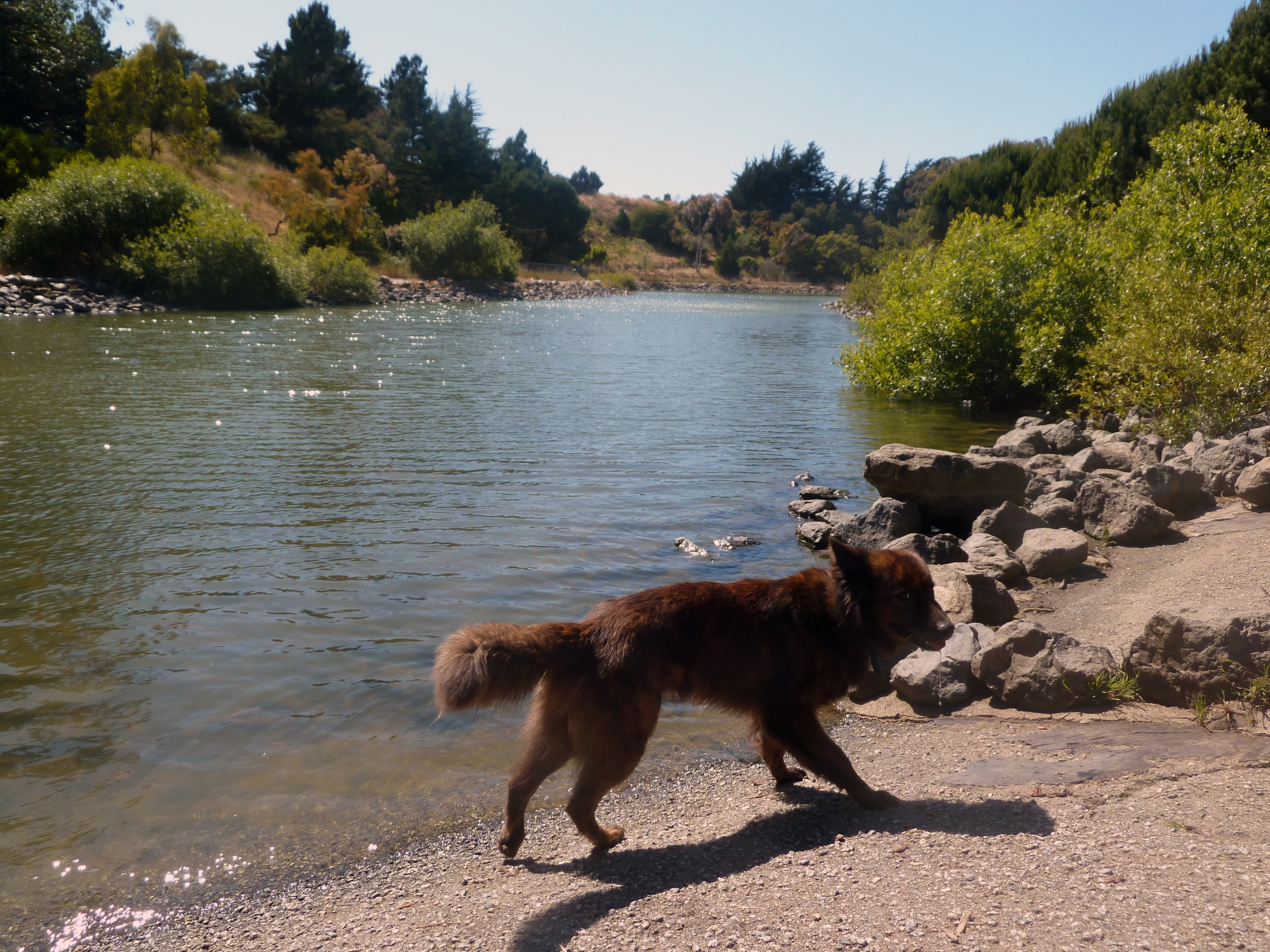 McLaren Park boasts a pond that only a dog could love.  (photo by D. Speredelozzi)
