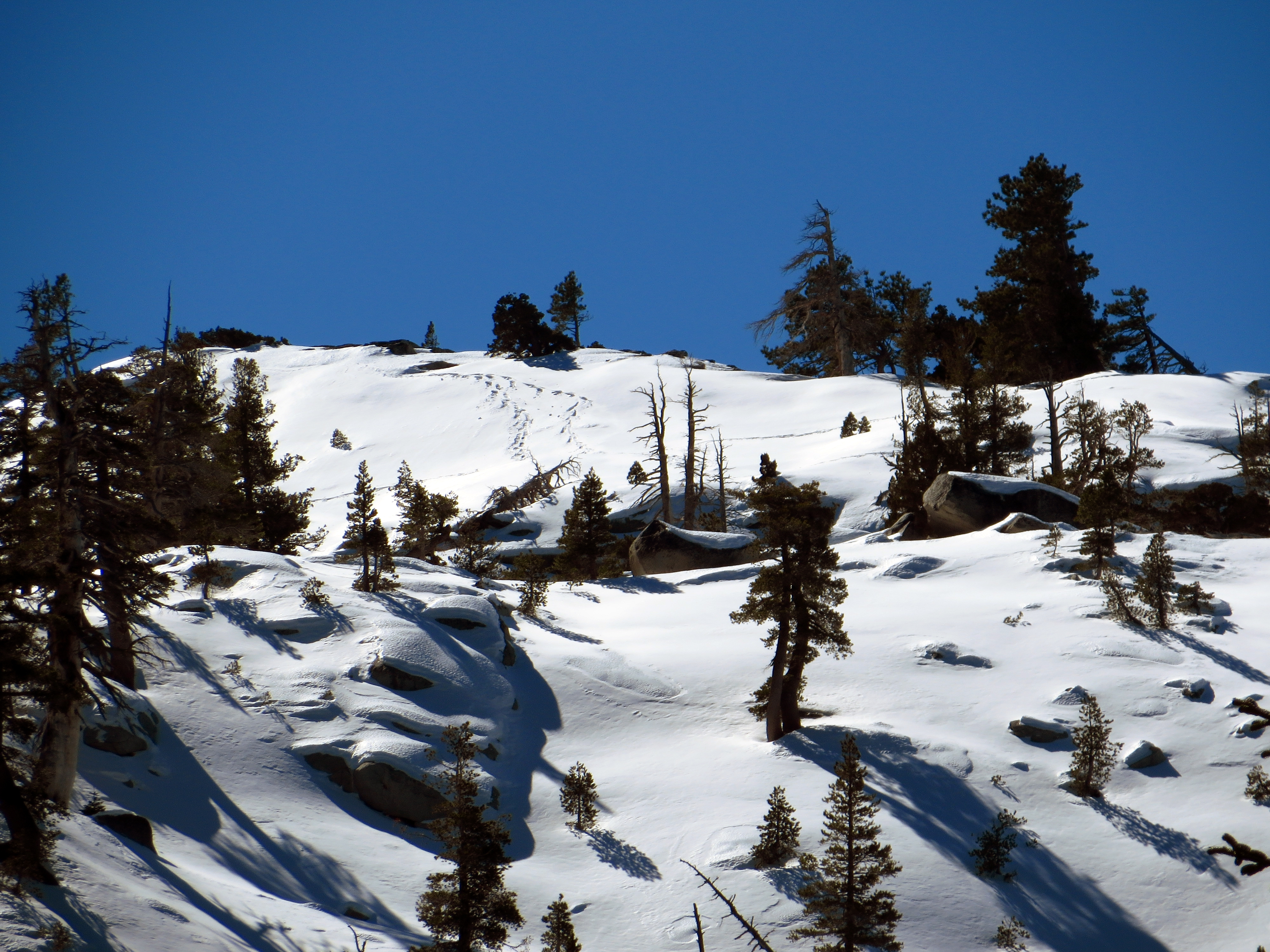 Our previous day's tracks are visible higher up on the mountainside.  (photo by D. Speredelozzi)