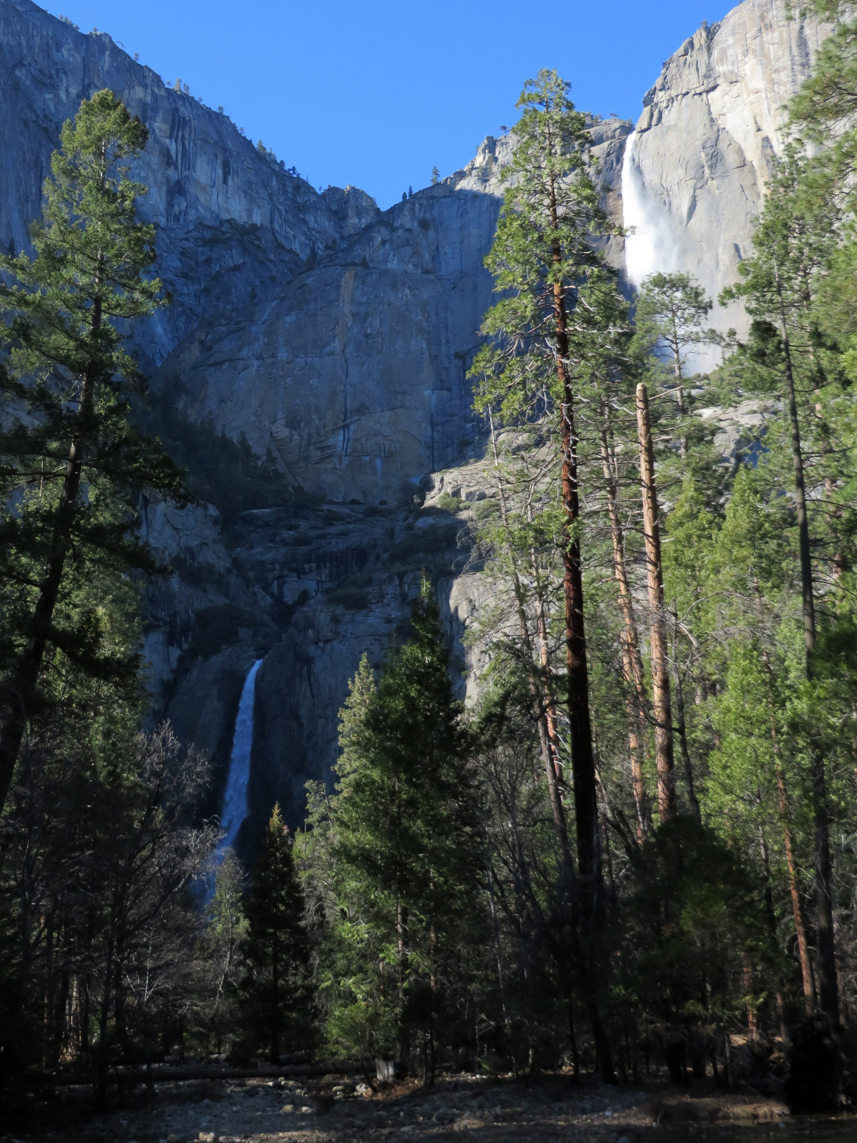 Together comprising the tallest waterfall in North America, the twin curtains of Upper and Lower Yosemite Falls spill the waters of Yosemite Creek over the lip of the canyon's north rim, from whence they plunge 2,425 feet into Yosemite Valley. (photo by D. Speredelozzi)