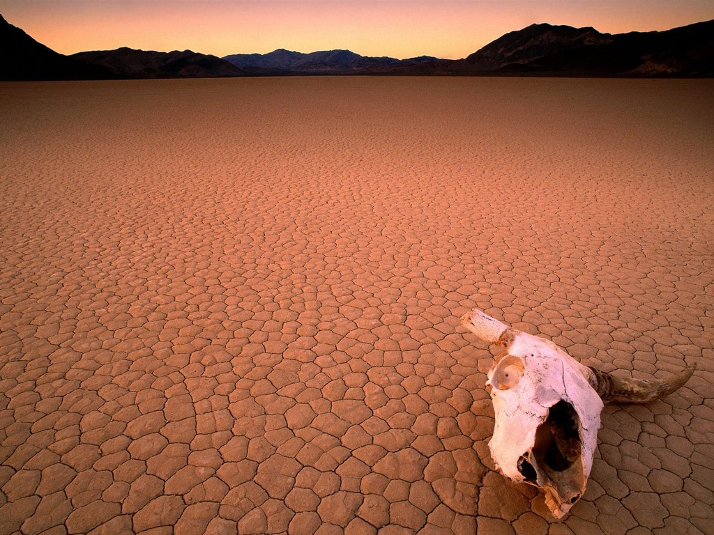 Don't be like this hapless steer- arm yourself with plenty of water before you set out on foot across the chapped wastes of Badwater Basin, lowest point in the western hemisphere.  (photo by Unknown)
