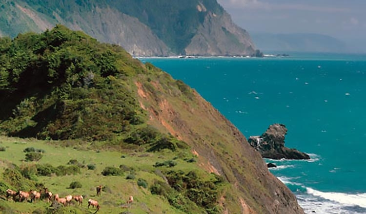 The Lost Coast is home to some of the luckiest Tule Elk to be found along the Pacific Rim.  (photo by Unknown)