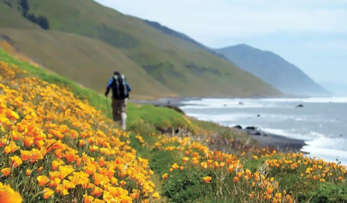 Only the hardy ever get to stroll this field of coastal wildflowers, set as it is along stretch of Pacific coastline accessible only by travelers on foot (or wing), and that only after lugging a loaded backpack across eleven of the most physically demanding trail miles you're likely to see anywhere.  (photo by Unknown)
