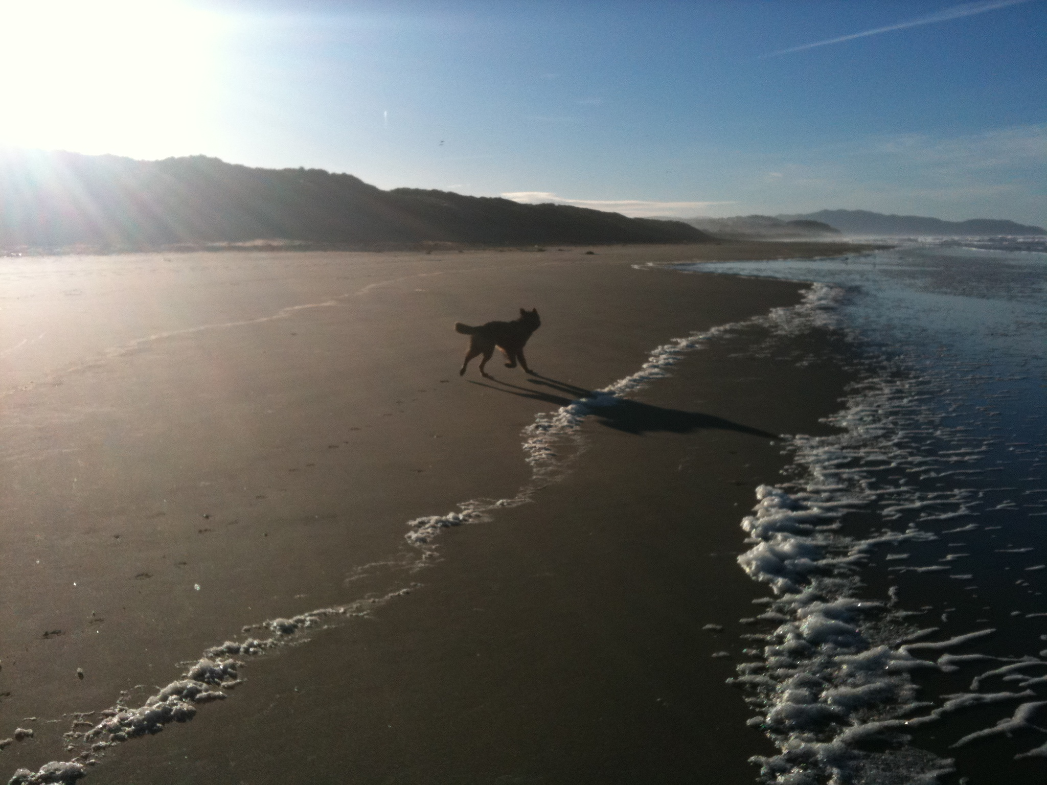 There's enough beach to go around.  Let the dogs run wild. (photo by D. Speredelozzi)