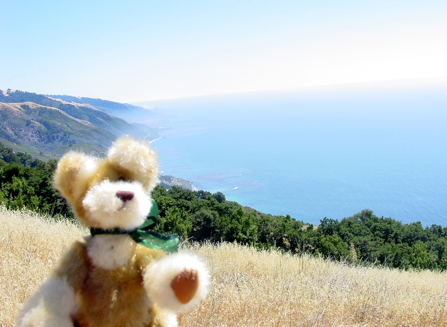 "Cast in the role of ""Traveling Amelie Santa-Gnome Type Character"", Chico the Bear takes a look down the California Coastline, trying to imagine, if he might, what awaits south of the border. (photo by D. Speredelozzi)"